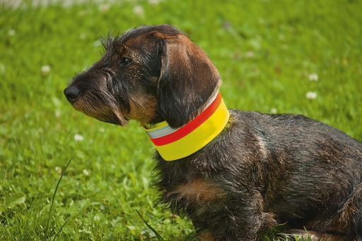 Zan Tex - Hundesignalb 6-60 Klett-Gummi 40-60cm